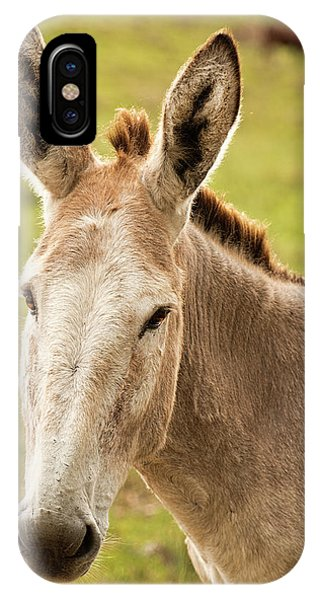 IPhone Case featuring the photograph Donkey Out In Nature by Rob D Imagery
