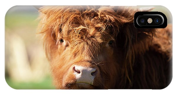 IPhone Case featuring the photograph Highland Cow On The Farm by Rob D Imagery