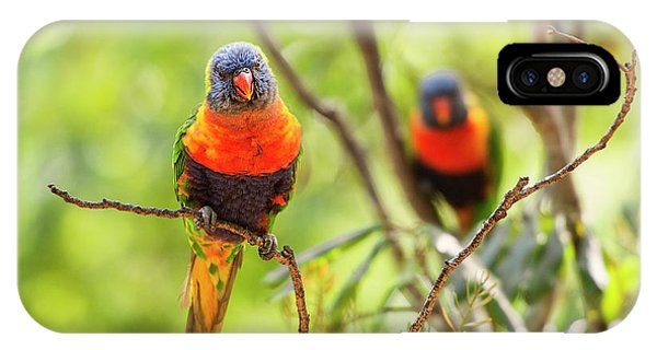 IPhone Case featuring the photograph Rainbow Lorikeets by Rob D Imagery