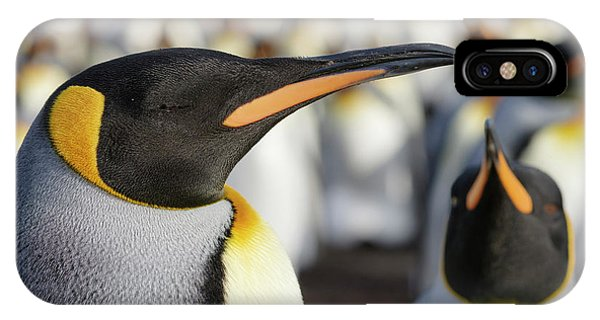 King Penguin On The Falkland Islands Phone Case by Martin Zwick
