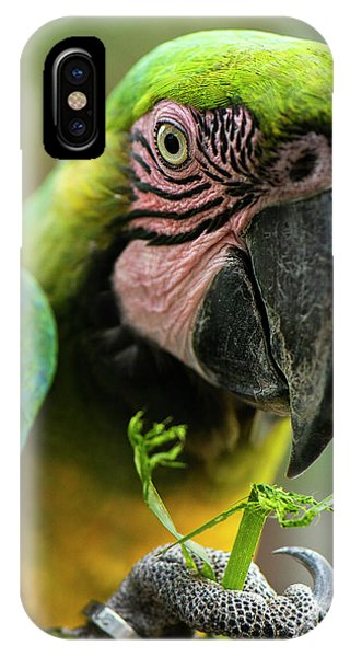 IPhone Case featuring the photograph Beautiful Macaw Bird by Rob D Imagery