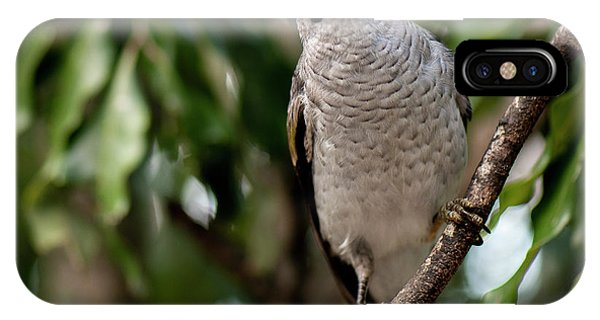 IPhone Case featuring the photograph Noisy Miner Bird By Itself by Rob D