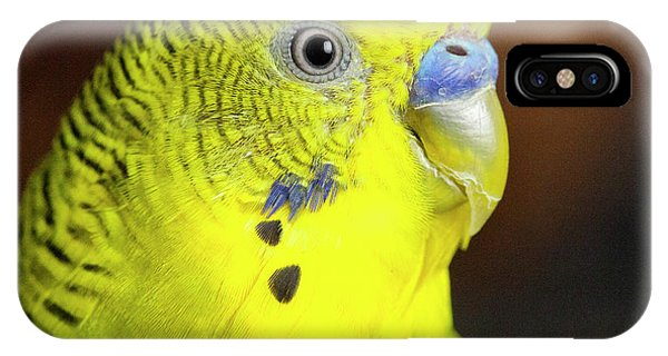 iPhone Case - Portrait Of Budgie Birds by Panoramic Images