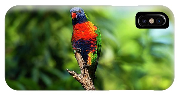IPhone Case featuring the photograph Rainbow Lorikeet by Rob D Imagery