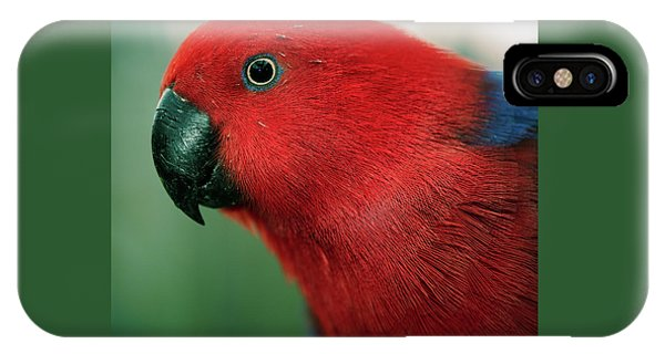 IPhone Case featuring the photograph Crimson Rosella by Rob D