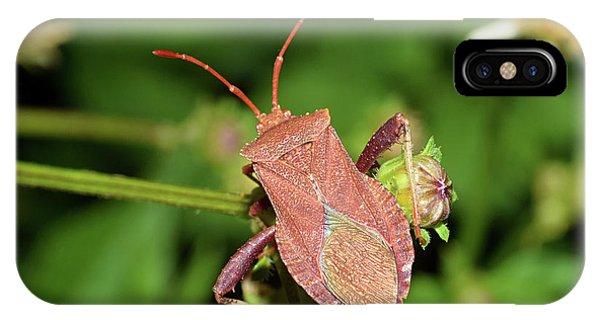 Leaf Footed Bug IPhone Case