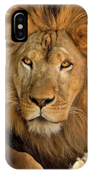 IPhone Case featuring the photograph 656250006 African Lion Panthera Leo Wildlife Rescue by Dave Welling