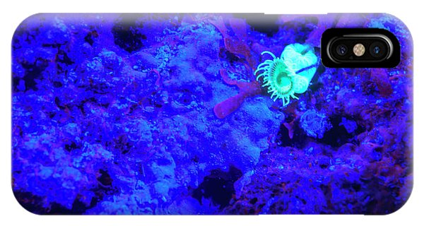 Belize iPhone Case - Night Dive At Barrier Reef Near Saint by Stuart Westmorland