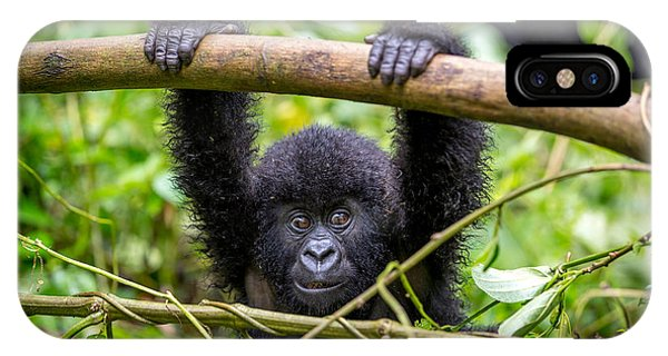 A Baby Gorila Inside The Virunga Phone Case by Lmspencer