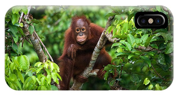 Zoology iPhone Case - A Baby Orangutan In The Wild by Gudkov Andrey