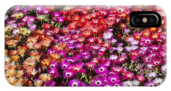 Scent iPhone Case - A Bed Of Livingstone Daisies In by Jason Benz Bennee