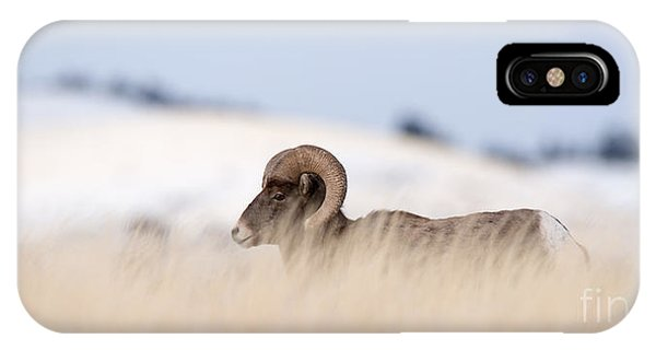 Montana State iPhone Case - A Big Horn Sheep Ram Walking From The by Lorraine Logan