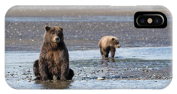 Bear Creek iPhone Case - A Brown Bear And Her Cub Watch For Fish by Brenda Tharp
