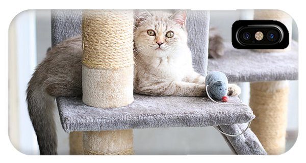 Adorable iPhone Case - A Cat Is Playing With Toy On Cat House by Punyaphat Larpsomboon