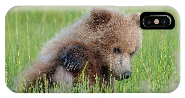 A Coy Cub IPhone Case