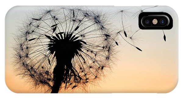 Botany iPhone Case - A Dandelion Blowing Seeds In The Wind by Janbussan