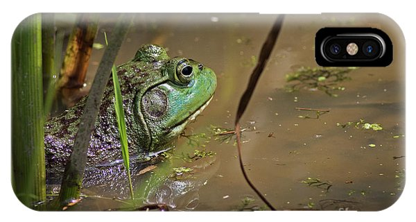 A Frog Waits IPhone Case