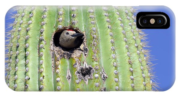 Cacti iPhone Case - A Gila Woodpecker Sticking Its Head Out by Kojihirano