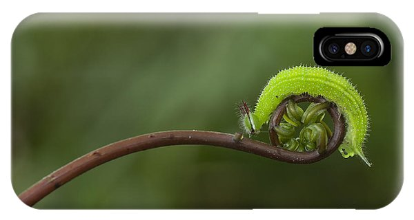 A Green Caterpillar Walked On A Fern Phone Case by Robby Fakhriannur