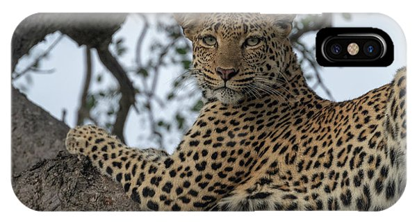 A Leopard Gazes From A Tree IPhone Case