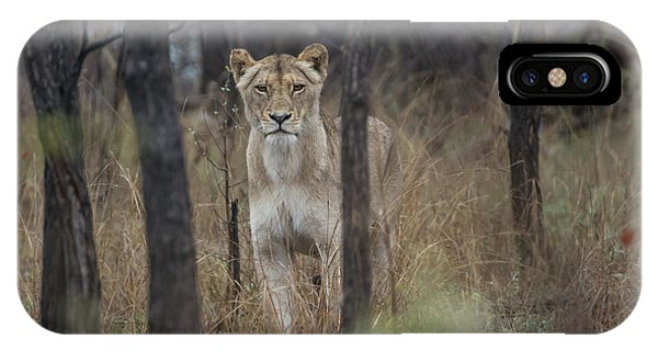A Lioness In The Trees IPhone Case