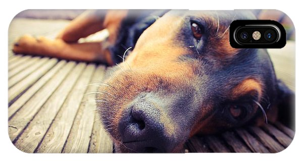 Mixed iPhone Case - A Mixed Breed Dog Dozing On Wooden Deck by Jo Millington