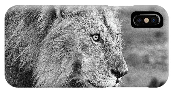 A Monochrome Male Lion IPhone Case
