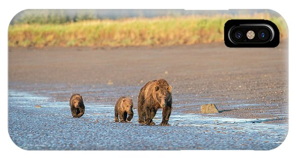 Bear Creek iPhone Case - A Mother Brown Bear Walks With Her Two by Brenda Tharp