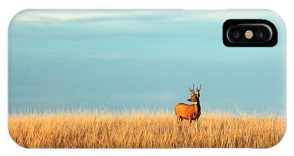 Space iPhone Case - A Mule Deer Buck Stands In A Tall Bed by Todd Klassy