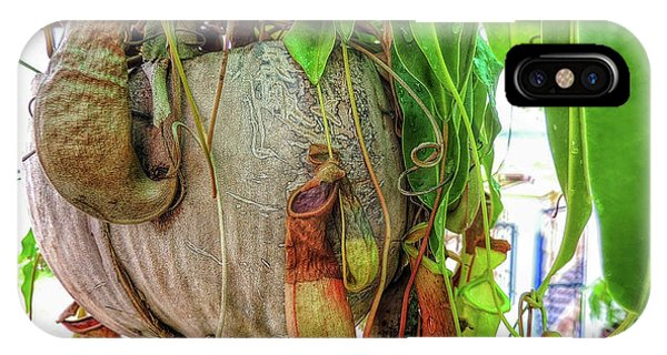 A Pitcher Plant On Our Terrace In Thailand IPhone Case