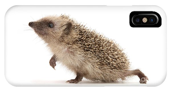 IPhone Case featuring the photograph A Prickly Problem by Warren Photographic