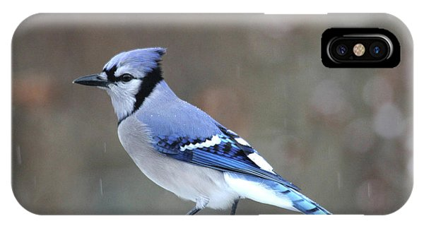 A Snowy Day With Blue Jay IPhone Case