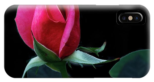 Rosebush iPhone Case - A Special Rose Bud by Robert Bales