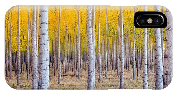 A Stand Of Trees Begins To Weather Fall Phone Case by Christopher Boswell