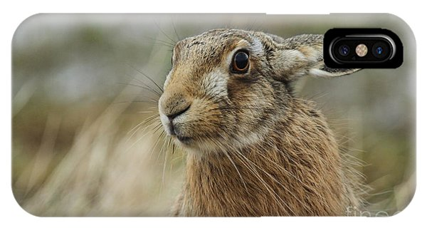 Cute iPhone Case - A Stunning Brown Hare Lepus Europaeus by Sandra Standbridge