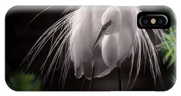 A Touch Of Class - Great Egret With Plumage IPhone Case