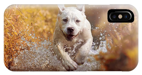 Drop iPhone Case - A Young Labrador Retriever Dog Is by Manushot