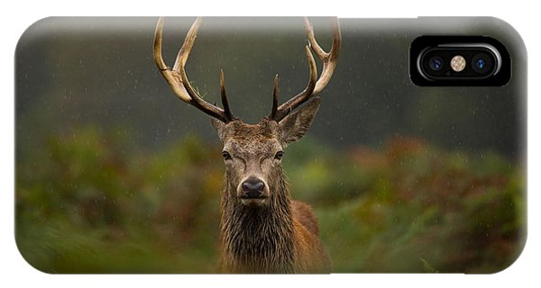 Stag iPhone Case - A Young Red Deer Stag by Andrew Swinbank