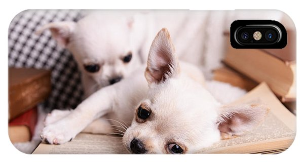 Chihuahua iPhone Case - Adorable Chihuahua Dogs With Books On by Africa Studio