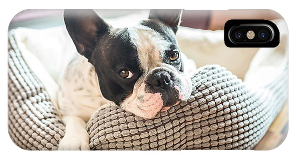 Adorable iPhone Case - Adorable French Bulldog On The Lair by Patryk Kosmider