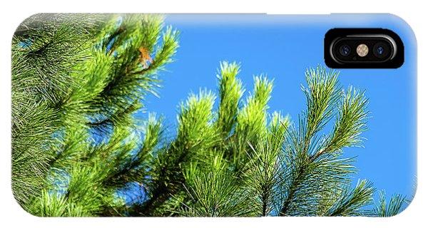 Adriatic Pine Against Blue Sky  IPhone Case