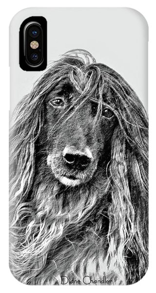 Afghan Hound 3 IPhone Case