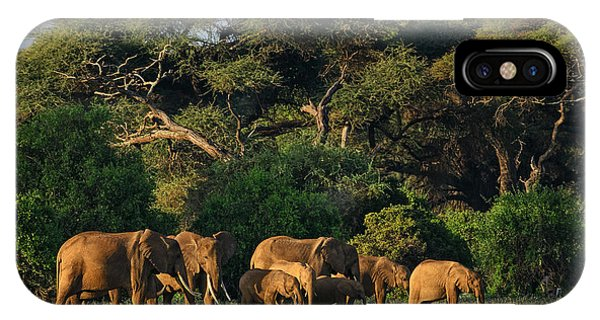 East Africa iPhone Case - African Bush Elephant - Loxodonta by David Havel