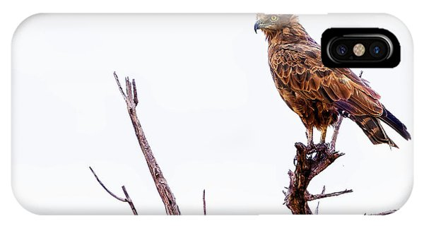 IPhone Case featuring the photograph African Crowned Eagle by Kay Brewer