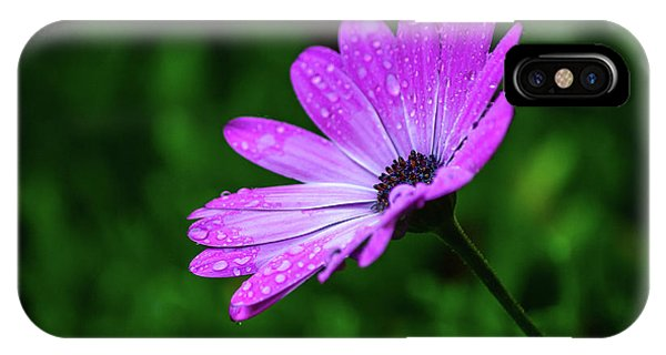 African Daisy II IPhone Case