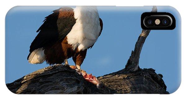 Claws iPhone Case - African Fish Eagle Haliaeetus Vocifer by Johan Swanepoel