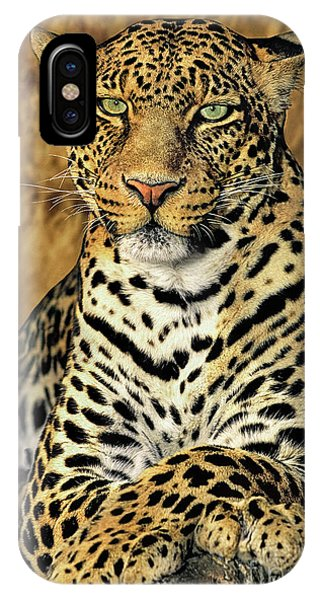 IPhone Case featuring the photograph African Leopard Portrait Wildlife Rescue by Dave Welling