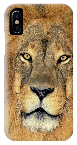 IPhone Case featuring the photograph African Lion Portrait Wildlife Rescue by Dave Welling