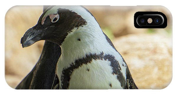 African Penguins Posing IPhone Case