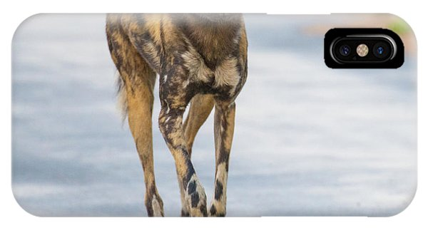 African Wild Dog Bouncing IPhone Case